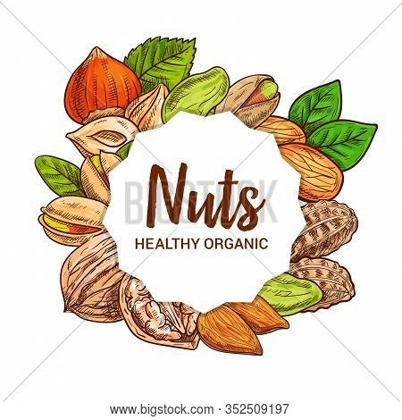 Nut Seeds, Legumes And Beans Vector Sketch Food Design. Almond, Hazelnut And Pistachio, Peanut, Waln