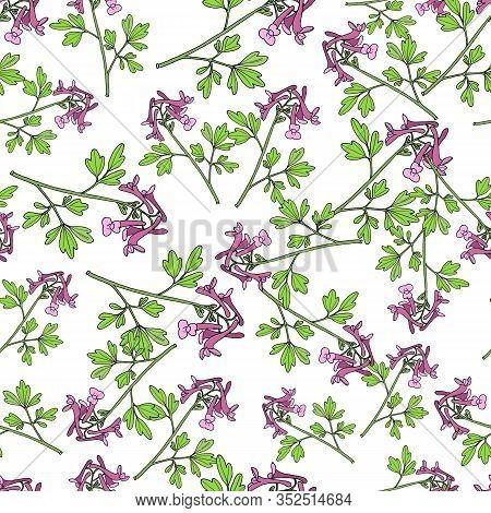 Seamless Pattern With Fumewort Corydalis Solida , Medicinal Plant. Vector Illustration