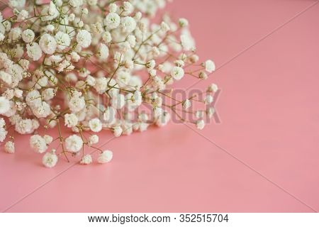 Gypsophila White Baby's Breath Flower On Pastel Pink Background With Copy Space. Sweet And Beautiful