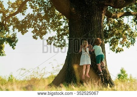 Happy Child Boy Climbing A Tree On Meadow In Summer In Nature. Kid Having Fun At Countryside