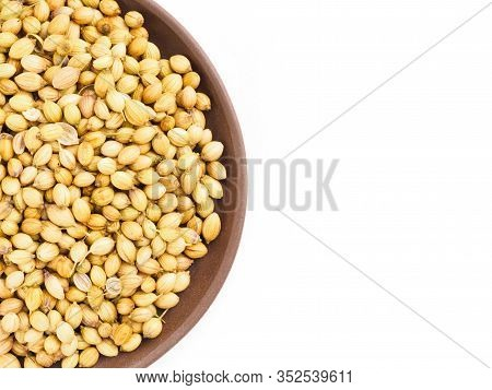 Spice Coriander (coriandrum Sativum) In Clay Plate, Isolated On White. Organic Food Concept