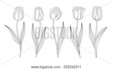 Collection Of Vector Hand Drawn Tulips With Stem And Leaf. Set Of Different Spring Flowers. Isolated