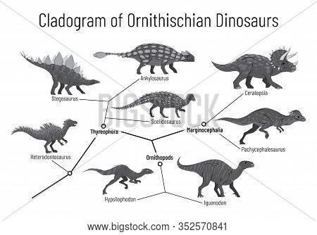Cladogram Of Ornithischian Dinosaurs. Monochrome Vector Illustration Of Diagram Showing Relations Am