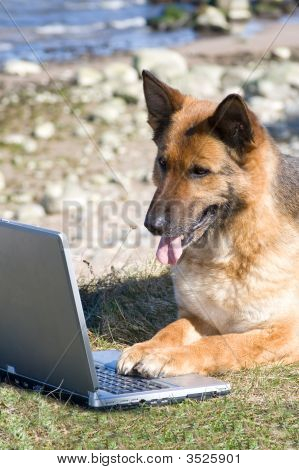 Germany Sheep-Dog With Laptop