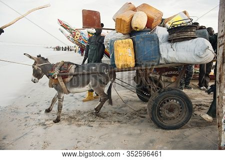 Ferlo Desert, Senegal, January 17, 2020: Local Transport Of People With Donkey Cart In West Africa.