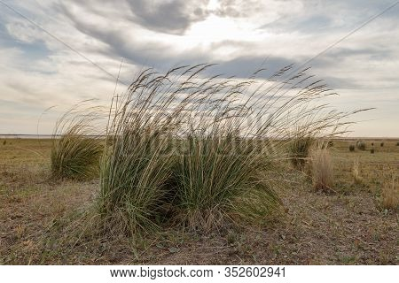 Many Large Hummocks Of Grass On The Shores Of A Salt Lake In The Kazakhstan Steppe