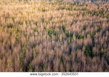 Aerial View Of Winter Forrest With All The Leaves Fallen Down. Mostly Birch Trees With Some Conifers