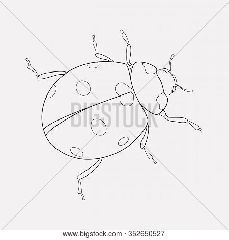 Ladybird Icon Line Element. Vector Illustration Of Ladybird Icon Line Isolated On Clean Background F