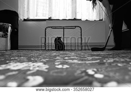 Chomutov, Czech Republic - February 19, 2020: Black Cat Violka As Hockey Goalie In Living Room