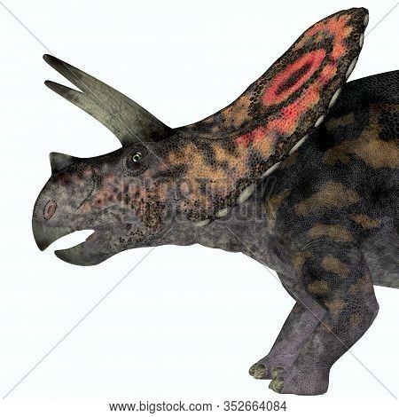 Torosaurus Dinosaur Head 3d Illustration - Torosaurus Was A Horned Herbivorous Ceratopsian Dinosaur