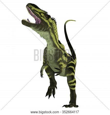 Torvosaurus Dinosaur On White 3d Illustration - Torvosaurus Was A Carnivorous Theropod Dinosaur That