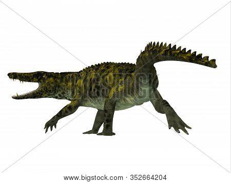 Uberabasuchus Reptile Tail 3d Illustration - Uberabasuchus Was A Carnivorous Reptile Crocodile That