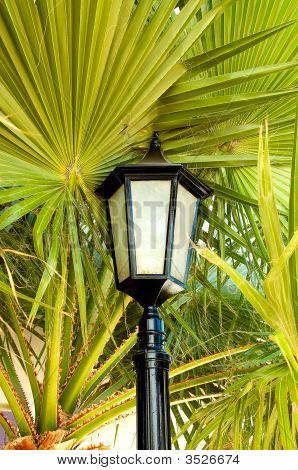 Lantern  Stand Next To The Palm.
