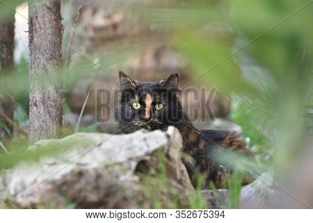 Yellow Cat Black With Yellow Eyes, Standing In The Bush And Grass. Green-eyed Black And Red Cat In T