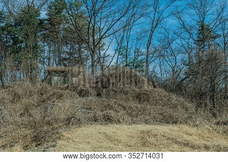 Wooden Shack Covered With Vines