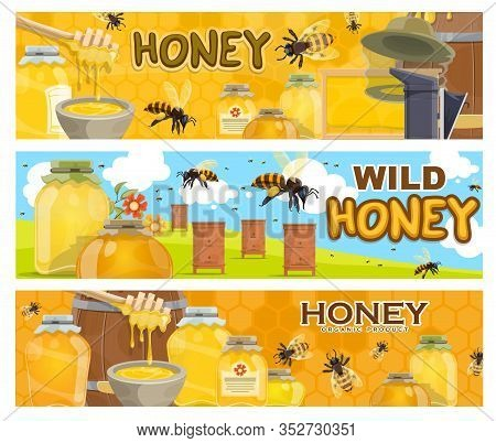 Honey, Bees And Apiary Beehives, Beekeeping Farm. Vector Honeycombs, Bee Insects And Flowers, Hives,