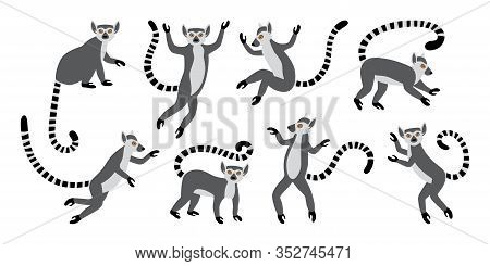 Cute Funny Ring-tailed Lemurs. Exotic Lemur Catta. Set Of Vector Illustrations In Cartoon And Flat S
