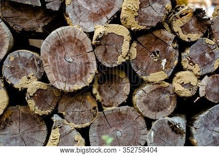 Soft Focus. Wood Texture Abstract Background. Closeup Of An Old Timber. Stacked Wooden Logs Abstract