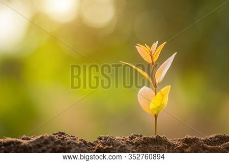 Green Sprout Growing In Soil With Outdoor Sunlight And Green Blur Background. Growing And Environmen