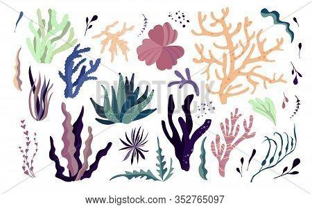 Underwater Sea Dwellers, Flora And Fauna Elements. Algae, Coral Reef, Kelp. Vector Cartoon Illustrat