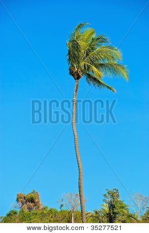 palm tree and the wind