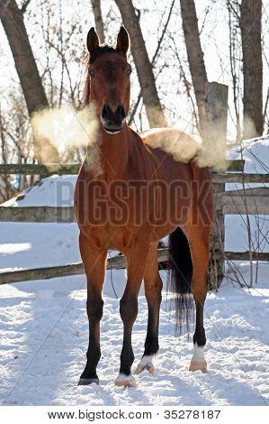 Horse in snow farm