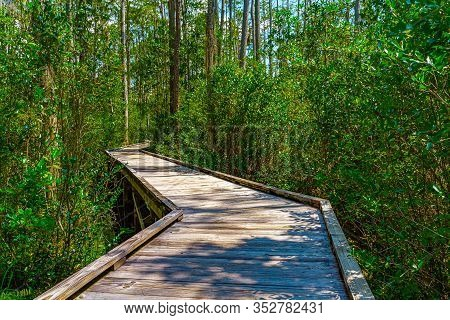 Wooden Path Through Forest Woods Of Okefenokee Swamp Park In Georgia.