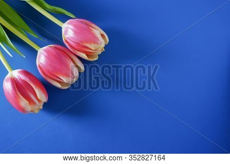 A Single Bright Pink Tulip From Above On A Classic Blue Background With Copy Space; Landscape View