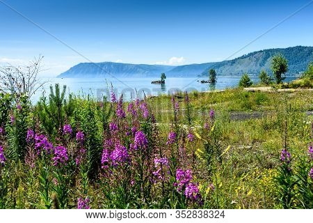 Summer Landscape With Mountains And Purple Flowers Ivan Chai On Lake Baikal. Circum-baikal Railway,