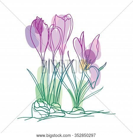 Vector Bouquet With Outline Pastel Purple Cyclamen Or Alpine Violet Bunch, Bud And Leaf Isolated On