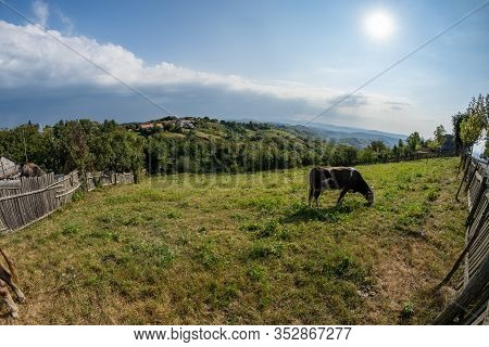 Pasture Near The Town In Romanian Banat With Cow In Distance