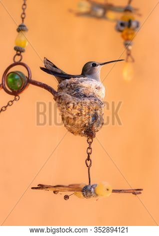 A Mother Humming Bird Nesting On Her Eggs