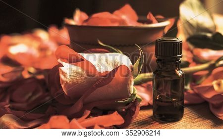 Essential Oil Dark Glass Bottle And Rosebud Among Rose Petals On The Wooden Table, Toned Warm, Selec