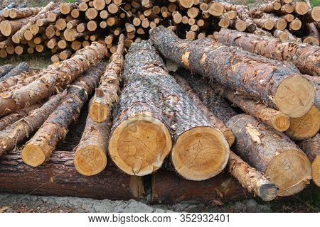 Woodpile Of Cut Lumber For Forestry Industry. Close Up