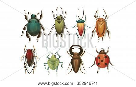 Realistic Bugs And Insects With Shadows Vector Set