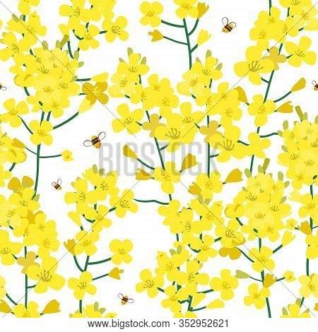Seamless Rape Plant Pattern, Vector Flower Background. Texture For Print, Spring Summer Fashion, Tex