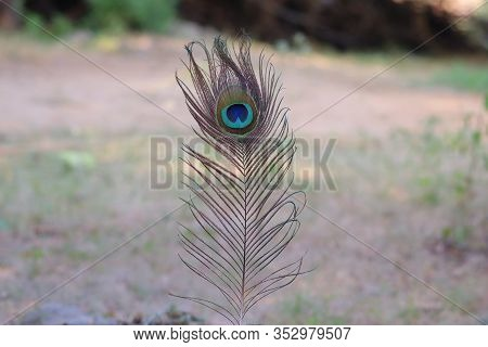 Close-up Of Colorful Natural Peacock Tails & Eye Feathers. The Brilliant, Shimmering Patterns Of Pea