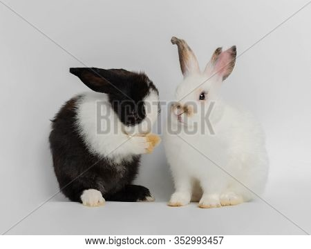 Two Cut Rabbits With Different Actions. White Rabbit Sitting While Black And White Rabbit Standing O