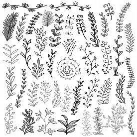 Set Of Hand Drawn Doodle Flowers, Leaves And Branches. Isolated On White Background. Vector Stock Il