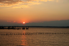 Sunset Over the Water with Flying Bird