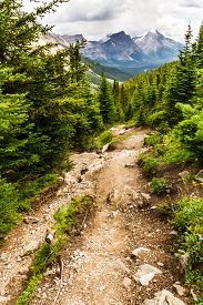 The Rocky Mountains   View Of Mount Hector From The Hiking Trail To Helen Lake In Banff National Par