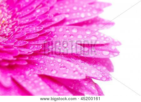 Abstract petals of a flower with drops