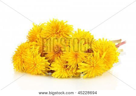 Dandelion flowers isolated on white