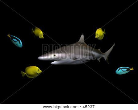 Shark And Fishes