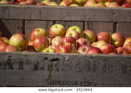Apples In Large Crate