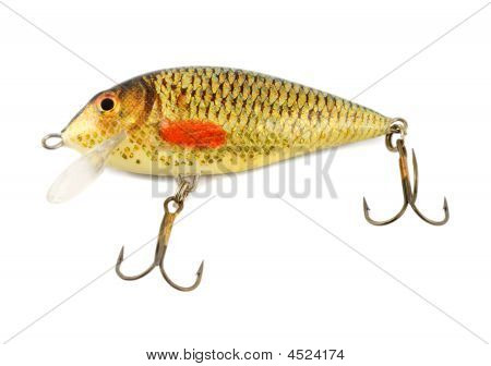 Fishing Bait Fish