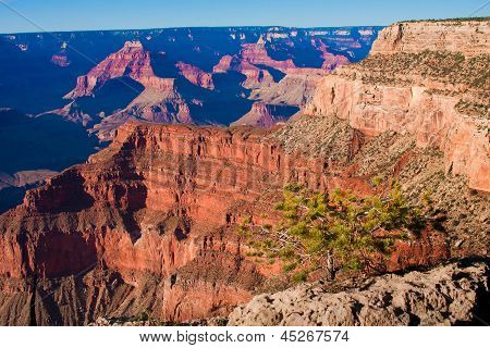 The Power of Life in Grand Canyon National Park