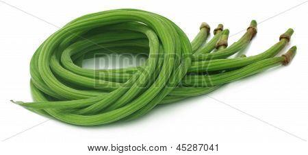 Close up of Moringa Oleifera or sonjna of Indian subcontinent