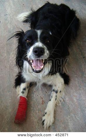 Dog With Bandaged Foot