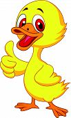 Vector illustration of Cute baby duck cartoon thumb up poster